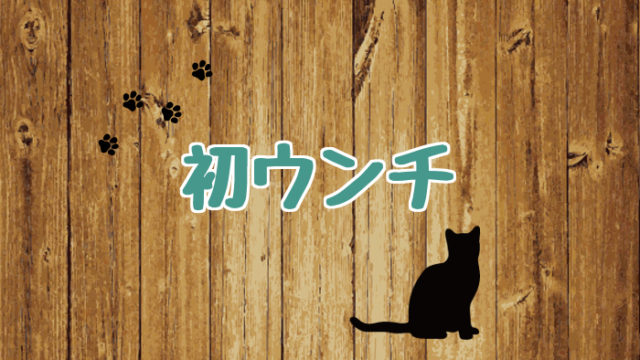 ブログ_アイキャッチ_初ウンチ