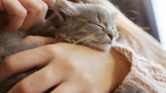 抱っこされた子猫