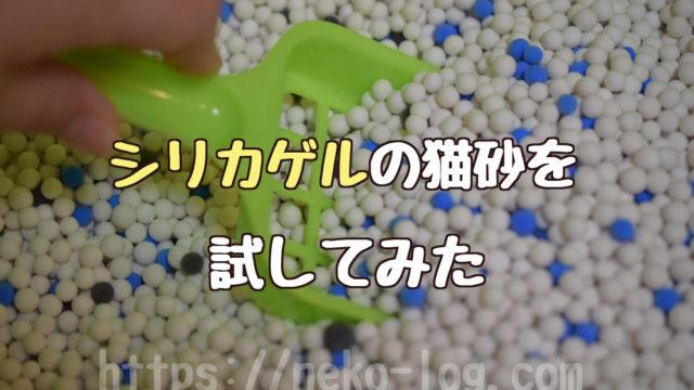 猫砂のシリカゲルの安全性は?_アイキャッチ