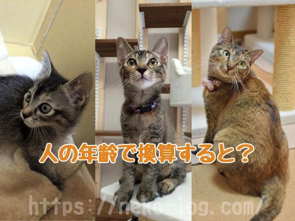 猫の年齢_03