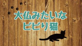ブログ_アイキャッチ_大仏みたいなビビり猫