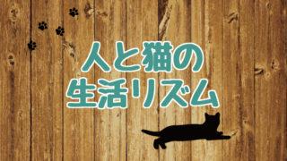 ブログ_アイキャッチ_人と猫の生活リズム
