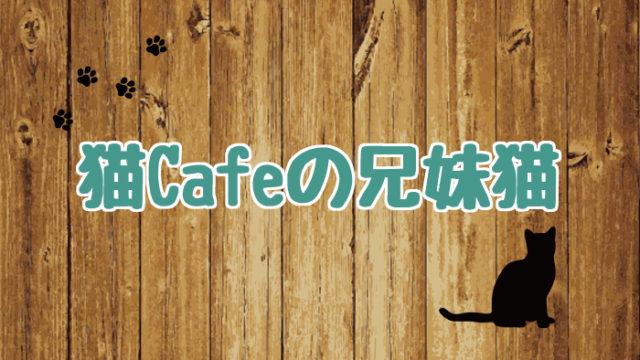 ブログ_アイキャッチ_猫Cafeの兄妹猫